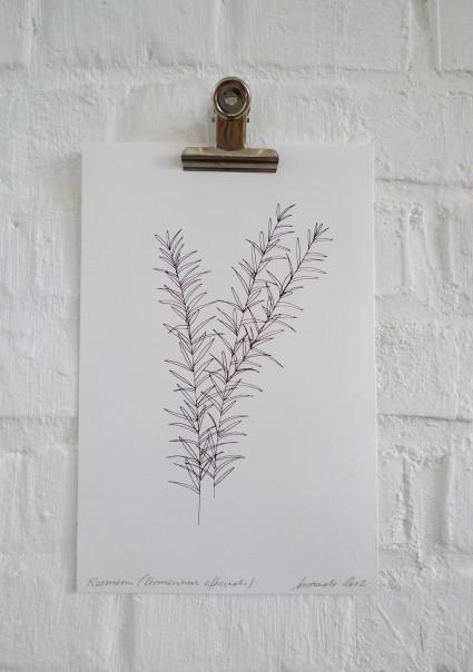 Rosmarin (Rosmarinus officinalis) // Druck auf Büttenpapier