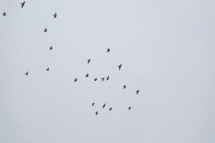 Vogelschar im Herbst