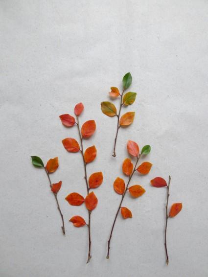 Die letzten, bunten Herbstblätter ...