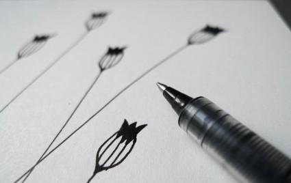 karamelo // Kornblumen Blütenstand Zeichnung