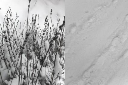Lavendel und Fußspuren im Schnee