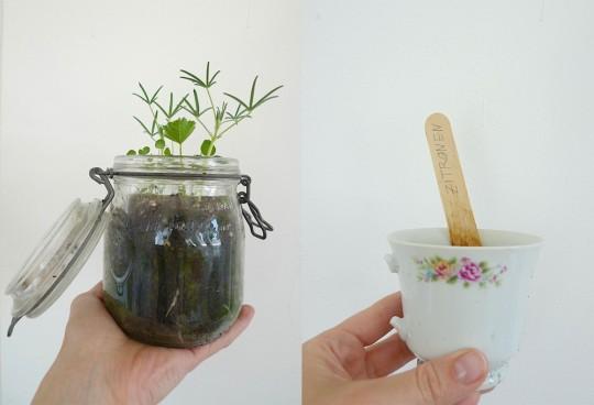 Hummelglück & Zitronenkerne pflanzen