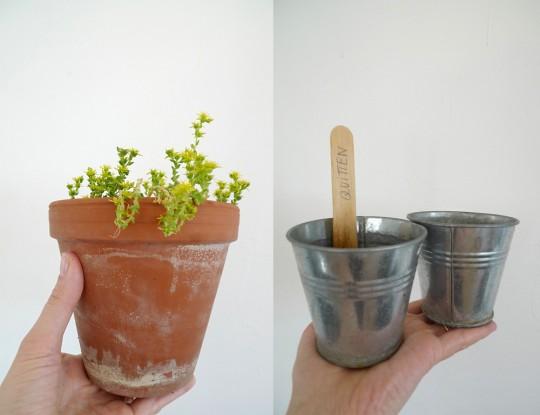 karamelo_Pflanzen_ziehen_03