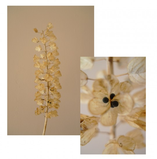 florale Fundstücke