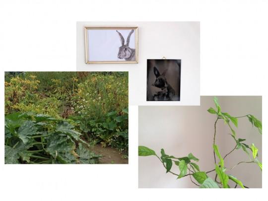 Drei Hasen und eine Avocado-Pflanze