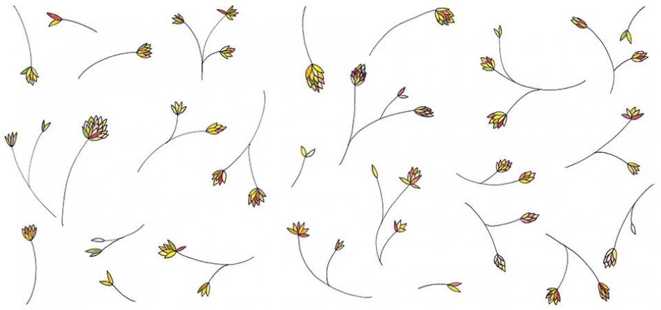 studiokaramelo_Illustration-Graeser