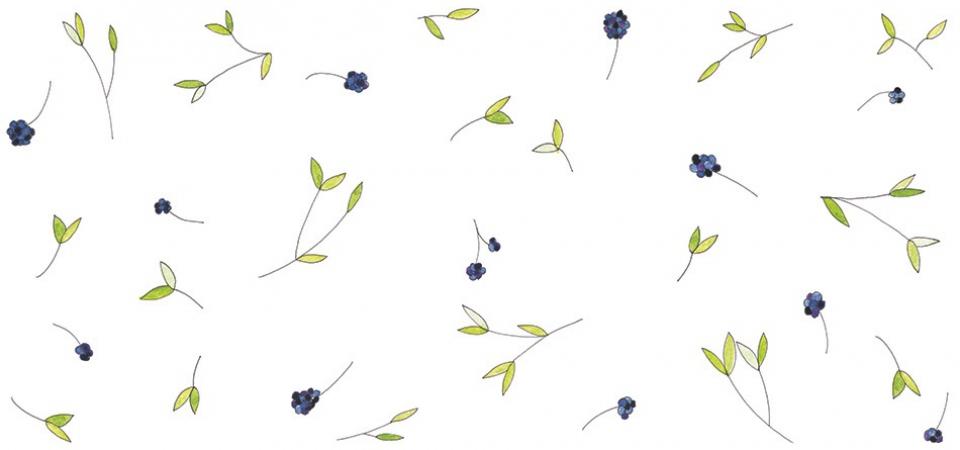 studiokaramelo_Illustration-Liguster