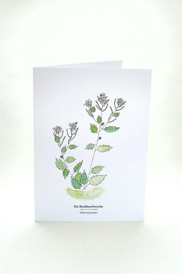 Wegesrandkraeuterkarte Knoblauchsrauke für die Kräuterwanderung   greeting card with wild herbs garlic mustard  studiokaramelo