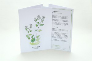 Wegesrandkraeuterkarte Knoblauchsrauke für die Kräuterwanderung | greeting card with wild herbs garlic mustard| studiokaramelo