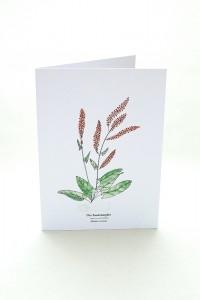 Wegesrandkraeuterkarte Sauerampfer für die Kräuterwanderung | greeting card with wild herbs common sorrel| studiokaramelo