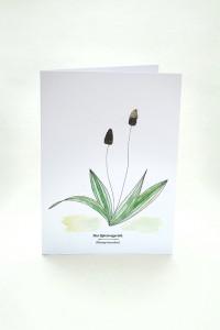 Wegesrandkraeuterkarte Spitzwegerich für die Kräuterwanderung | greeting card with wild herbs ribworth| studiokaramelo