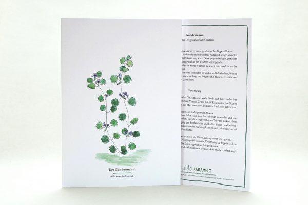 Wegesrandkraeuterkarte Gundermann für die Kräuterwanderung | greeting card with wild herbs ground ivy | studiokaramelo
