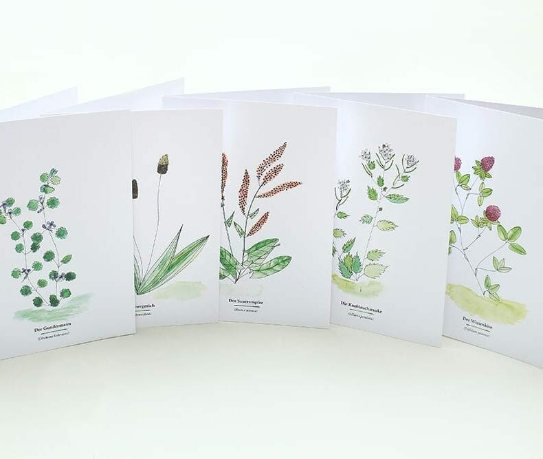 Wegesrandkraeuterkarten Spitzwegerich, Gundermann, Knoblauchsrauke, Sauerampfer und Wiesenklee