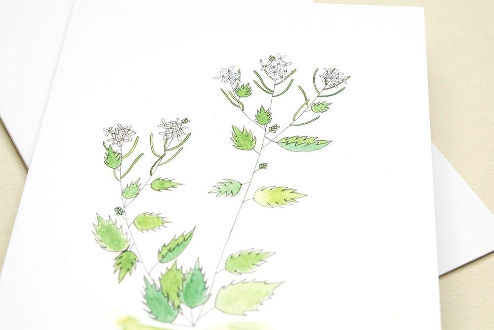 Wegesrandkraeuterkarten Spitzwegerich, Gundermann, Knoblauchsrauke, SWegesrandkraeuterkarrte Knoblauchsrauke Illustration Grusskarte