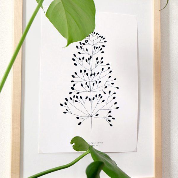 Botanischer Druck Felsenstraußgras, Recyclingpapier, STUDIO KARAMELO | botanical print