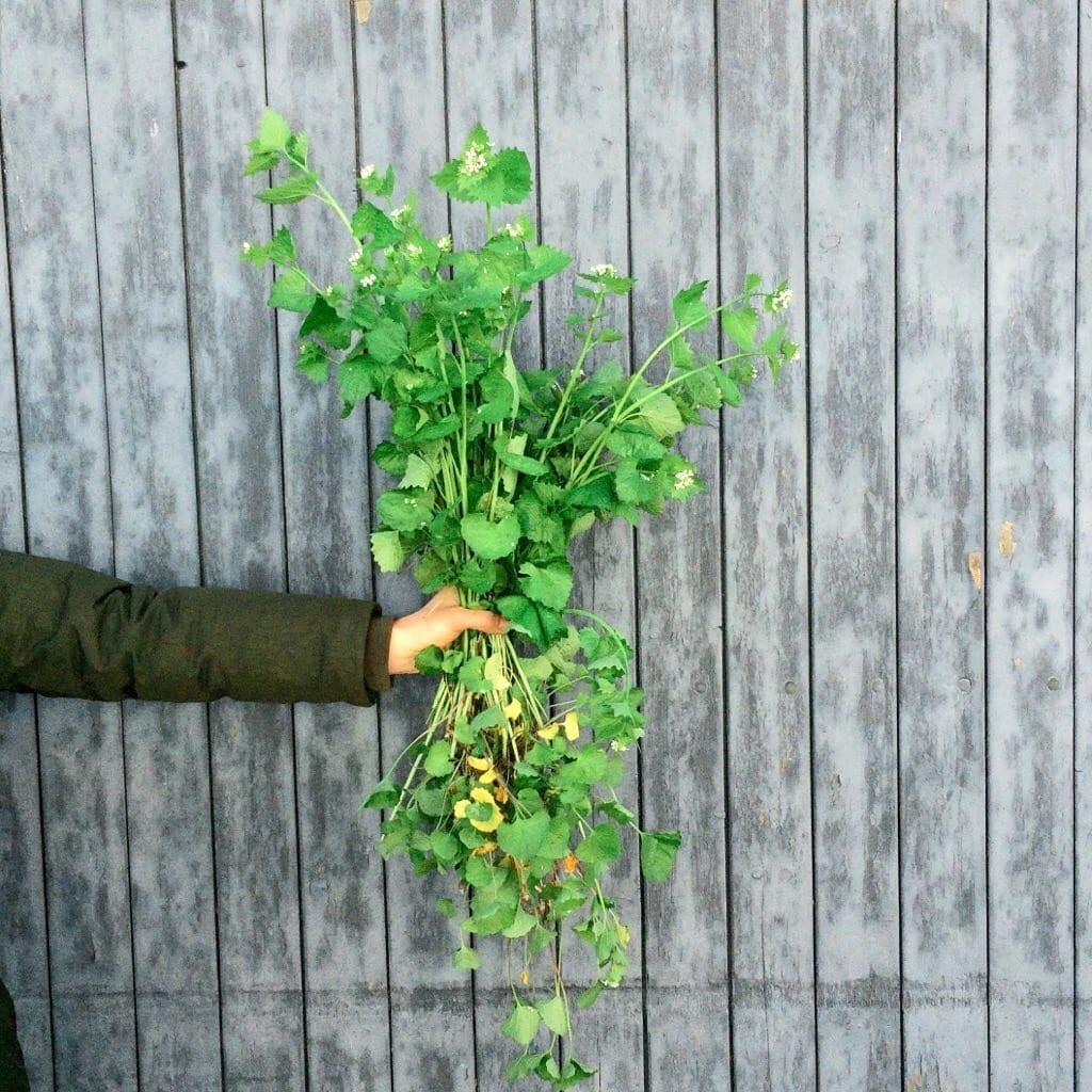 Pesto aus Knoblauchsrauke | GRüße aus der Küche | STUDIO KARAMELO