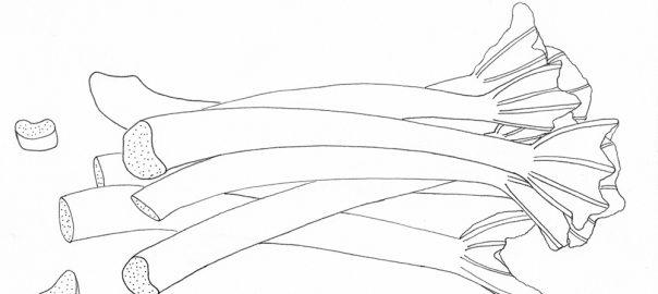 Rhabarber Illustration | STUDIO KARAMELO
