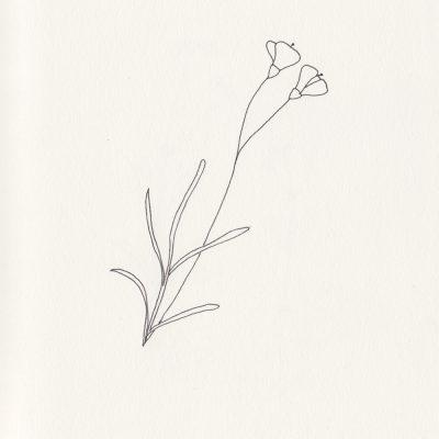Botanische Illustration, Lein, flax, floral illustration, wedding, botanical illustration | STUDIOKARAMELO | Illustrationen Pflanzen für Logo, Branding, Produktverpackungen, Hochzeiten