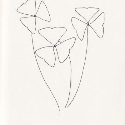 Botanische Illustration, Oxalis triangularis, botanical illustration | STUDIOKARAMELO | Illustrationen Pflanzen für Logo, Branding, Produktverpackungen
