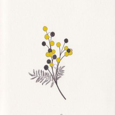 Botanische Illustration, Rainfarn, tansy, botanical illustration | STUDIOKARAMELO