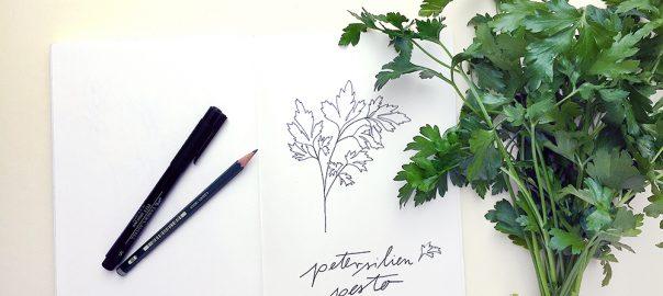 Petersilien Illustration | STUDIO KARAMELO | parsley illustration sketchbook