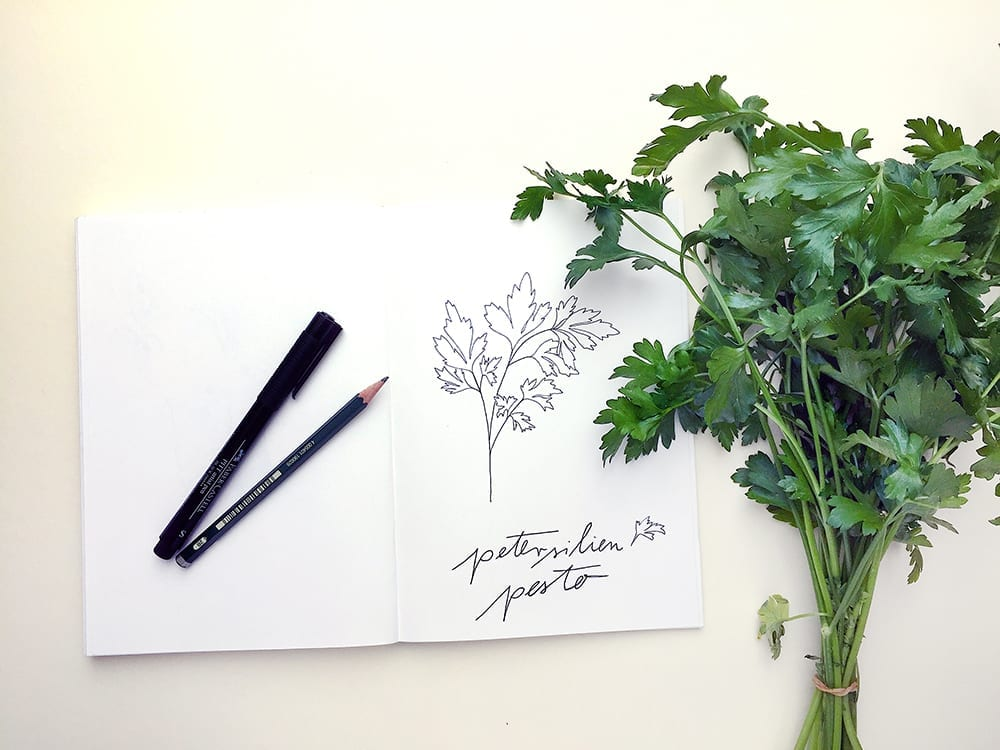 Petersilien Illustration | STUDIO KARAMELO | parsley illustration sketchbook