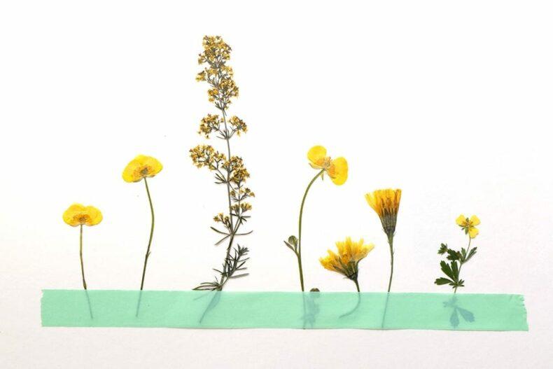 Blumenpresse, gepresste Blumen | STUDIO KARAMELO | wooden flower press