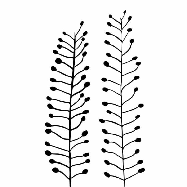 Botanischer Druck Hirtentäschel auf Recyclingpapier | STUDIO KARAMELO
