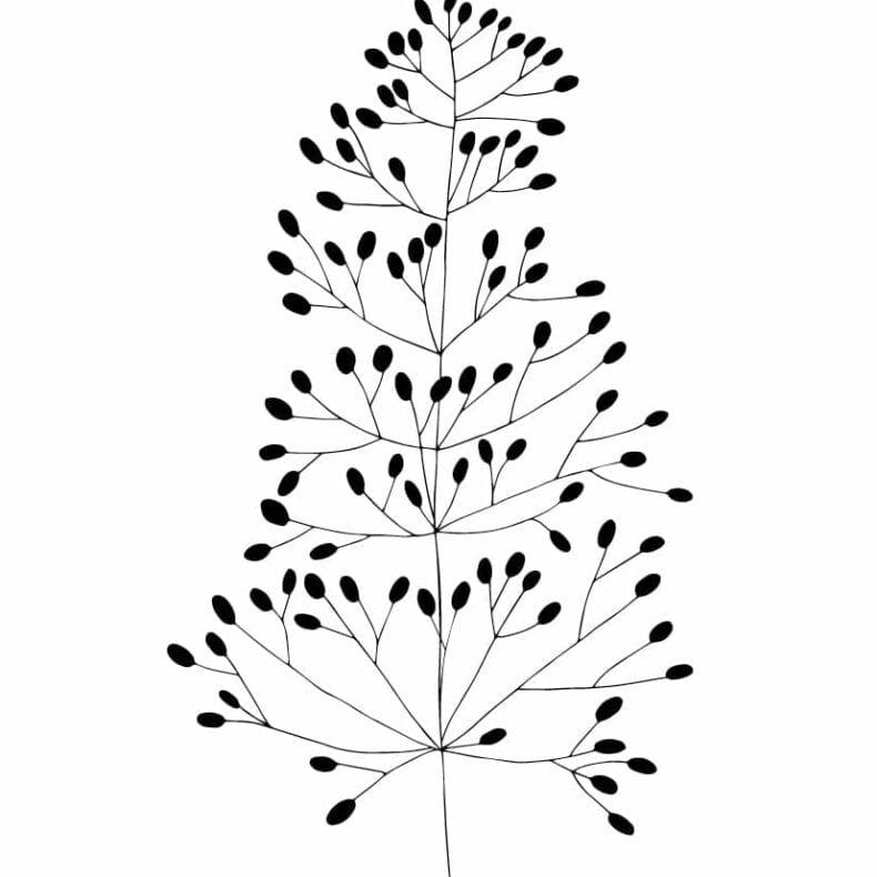 Botanischer Druck Straußgras auf Recyclingpapier | STUDIO KARAMELO