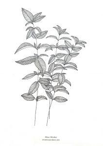 Botanischer Druck Minze auf Recyclingpapier | STUDIO KARAMELO