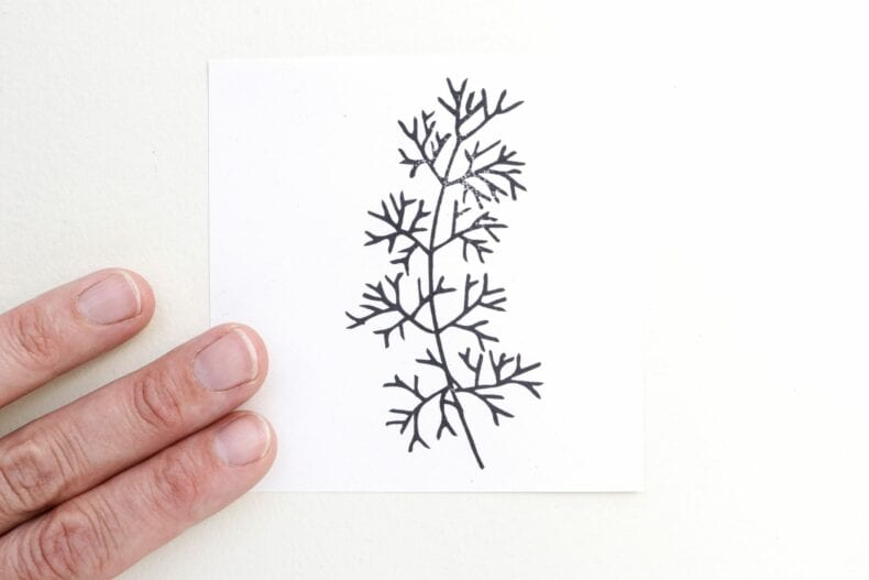 Stempel, Pflanzenstempel Alge STUDIO KARAMELO