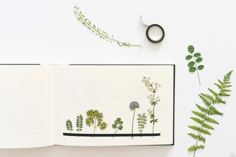 Sammlung gepresste Blumen, Veilchen Farn und Ringelblumen, Verlag freies Geistesleben