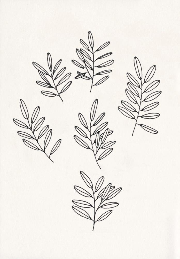 botanische Illustration, Zweige, florale Zeichnung | STUDIO KARAMELO