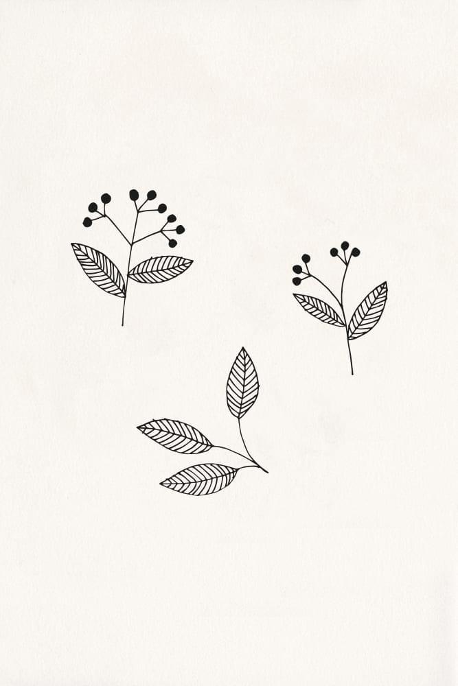 florale Illustration, Holunder, Dolde, botanische Illustration | STUDIO KARAMELO
