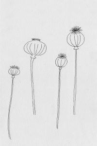 florale Illustration, Mohnkapseln, Klatschmohn   STUDIO KARAMELO