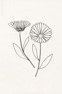 florale Illustration, Ringelblume, Blüten, botanische Illustration | STUDIO KARAMELO