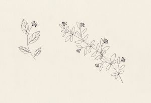 florale Illustration, Zweige mit Knospen   STUDIO KARAMELO
