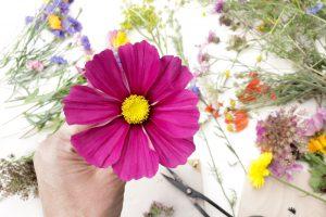 Wie presst man Blumen, Anleitung | STUDIO KARAMELO